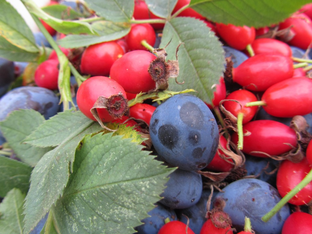 damsons and rosehips