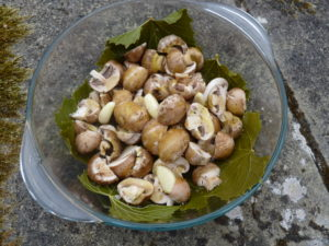 Vine leaves and mushrooms